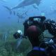 南オーストラリアでのホホジロケージダイブクルーズ Part.2              ボトムケージダイビング