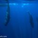 2017 スリランカ・ホエールスイムweek1  クジラを取り囲む状況