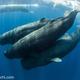 スリランカweek2  & week3   毎日、シロナガスクジラやマッコウクジラと遭遇