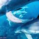 INTO THE BLUE & underwater.jp 共同開催の御蔵島ドルフィンスイムスケジュール追加日程