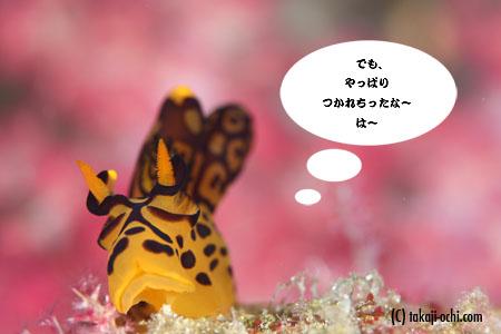_MG_0546.jpg