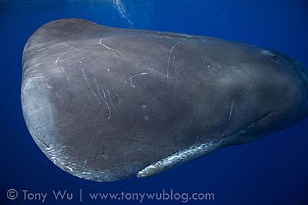 whale_face.jpg