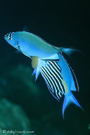 fish-egg-20140604-3-333x500.jpg