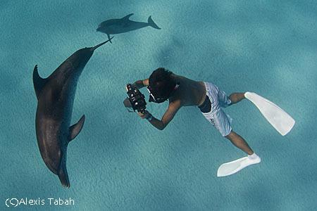 Bahamas_dolphins_alexis_tabah-31.jpg