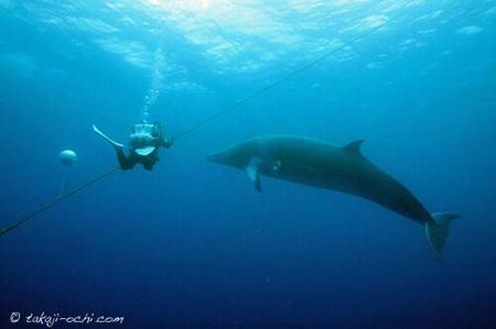 minke-whale-20140626-6-500x333.jpg