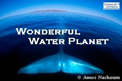 WonderfulWaterPlanet-ProjectImage.jpg