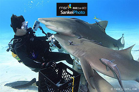110307_ochi_tigershark_4.jpg