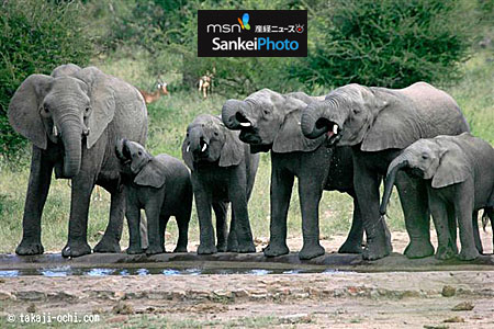 20110423ochi_safari_A7_5632.jpg
