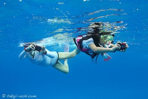 bahamas_dolphin_20140805-15-500x333.jpg