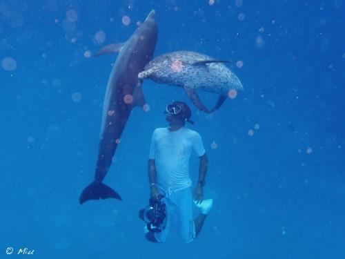 bahamas_dolphin_20140805-17-500x375.jpg